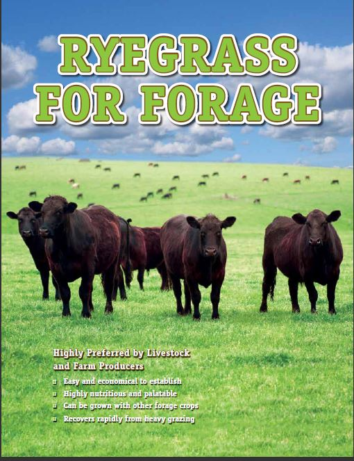 Forage brochure cover